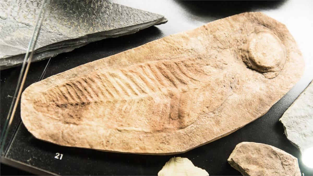 Razstavljen fosil
