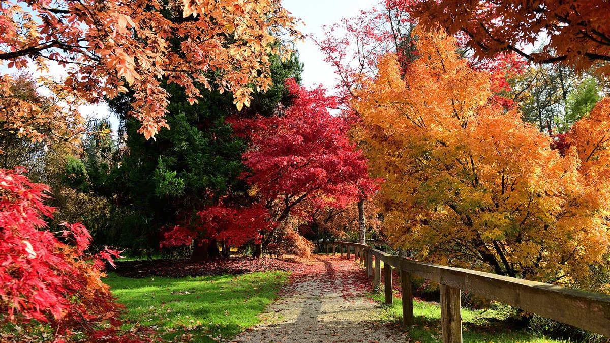 Park v jeseni