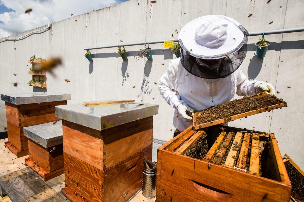 Čebelar pri delu