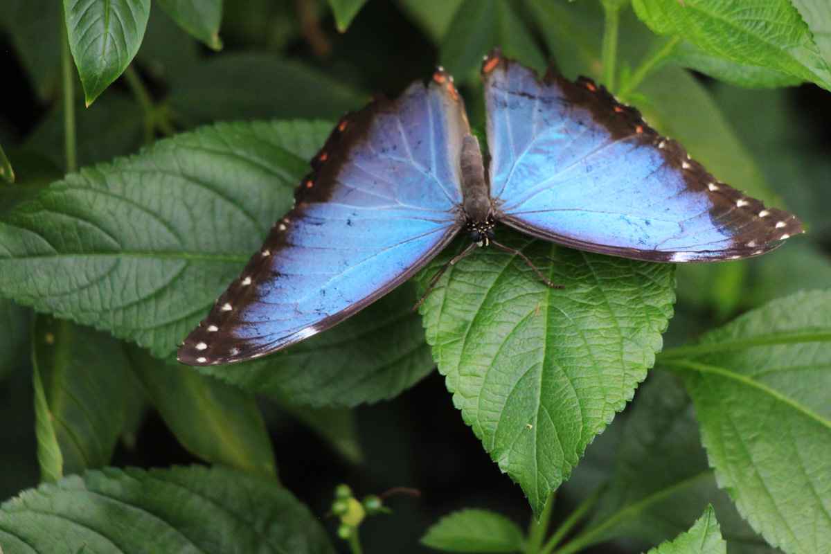 Razstava tropskih metuljev