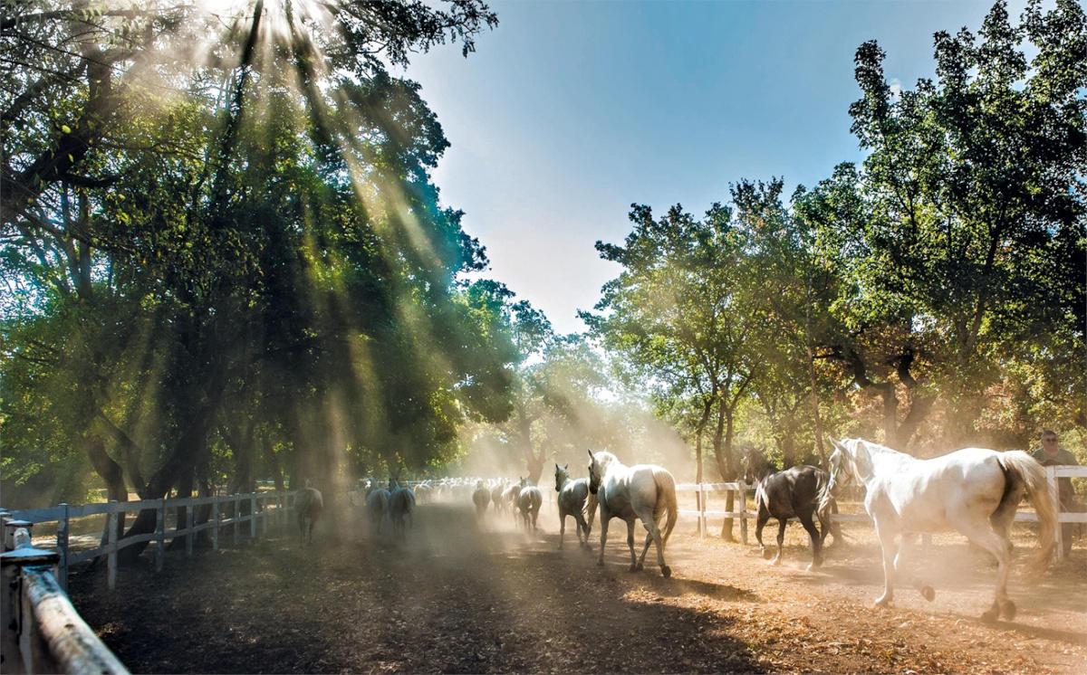 Konji ob ogradi