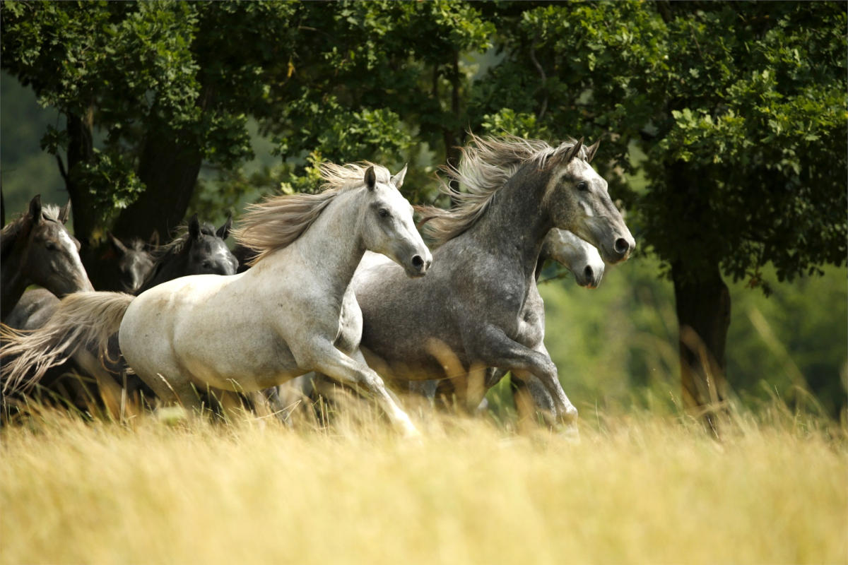 Konji v diru