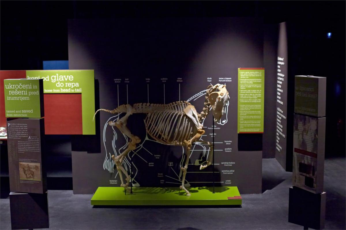 Muzej lipicanca Lipikum