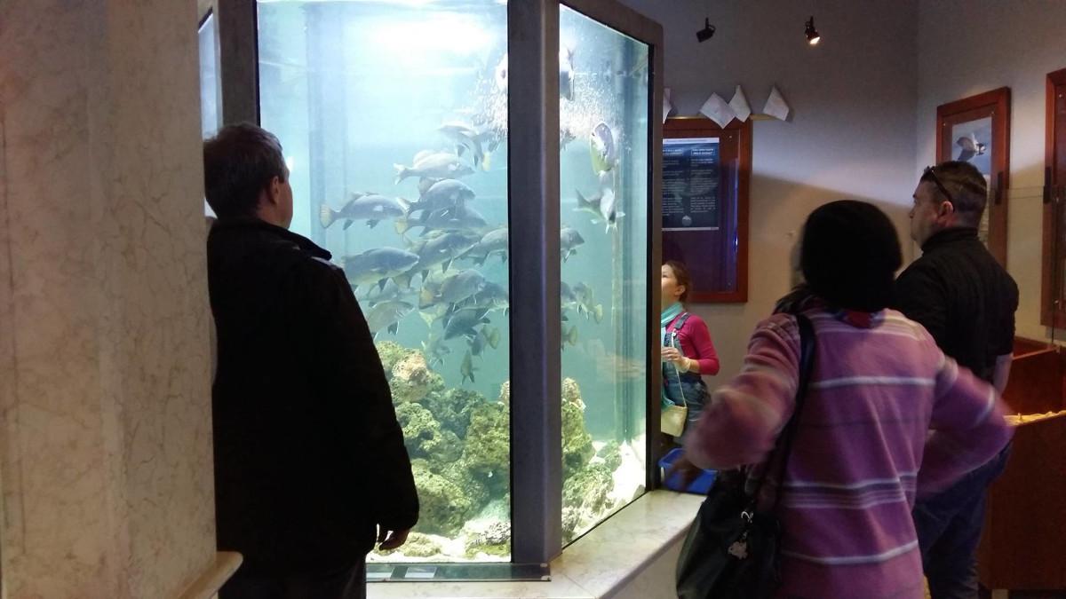 Del Akvarija Piran