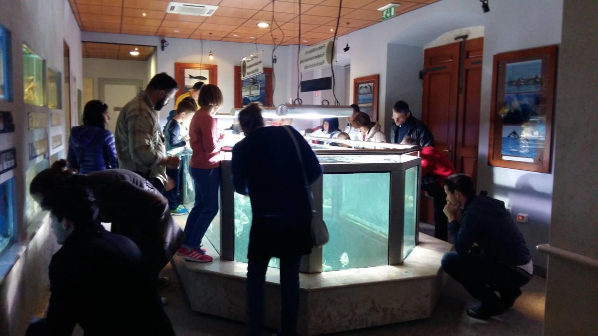 Osrednji akvarij