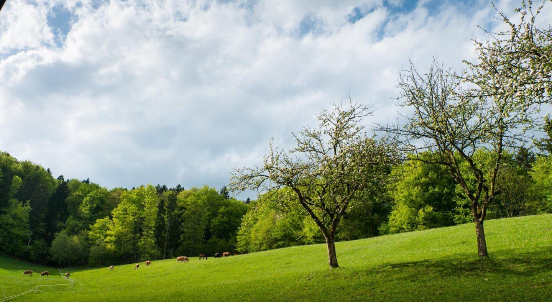 Sredi neokrnjene narave
