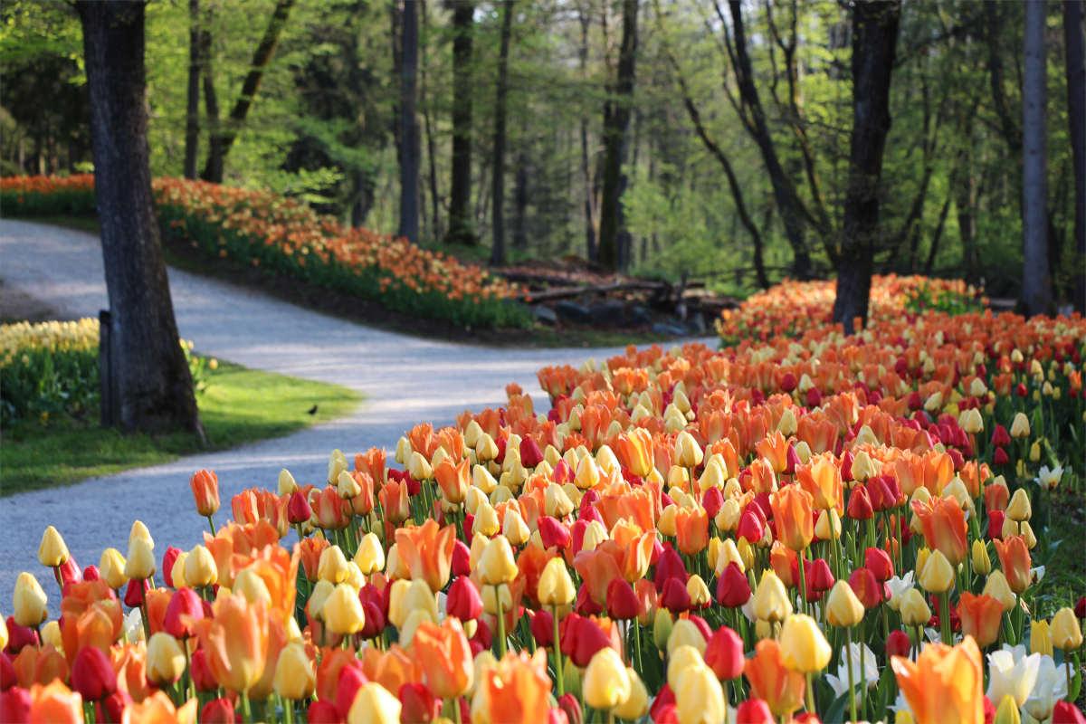 Pomlad v arboretumu