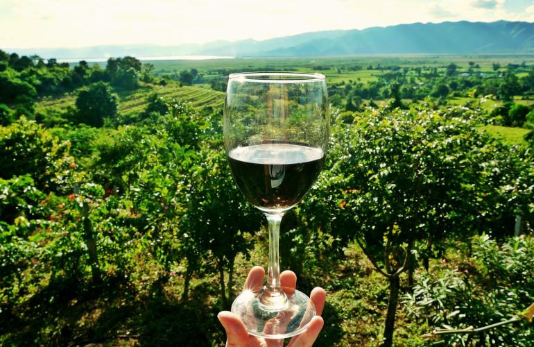Degustacije vin v dostopnih vinskih kleteh