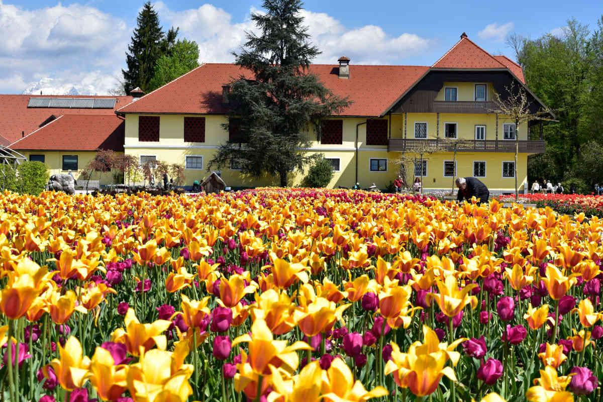 Pomladno razcveteni Arboretum Volčji potok