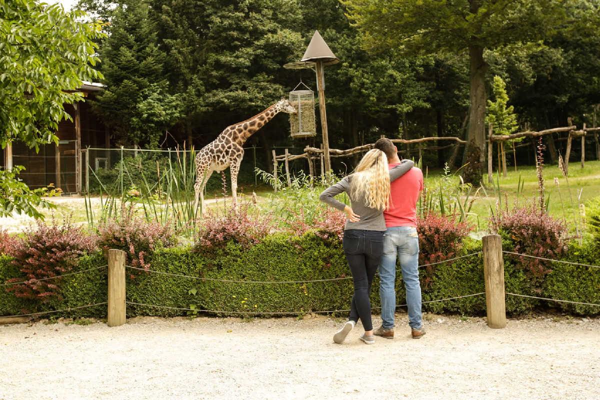 Ograda z žirafami