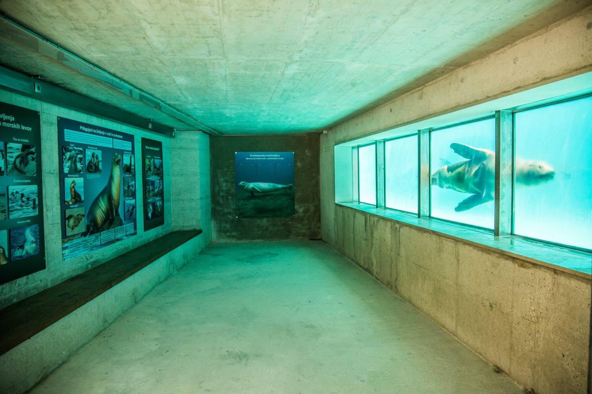 Spodnji del bazena morskega leva