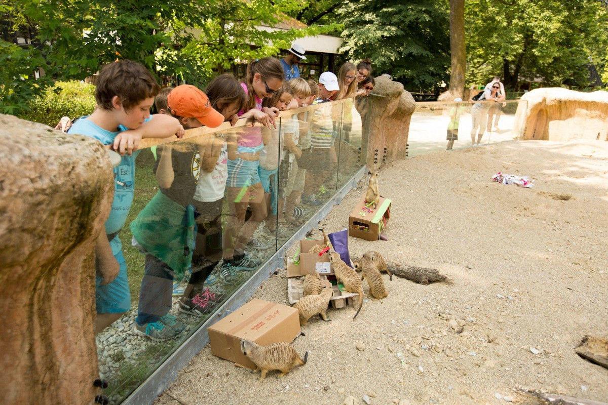 Ograda s surikatami