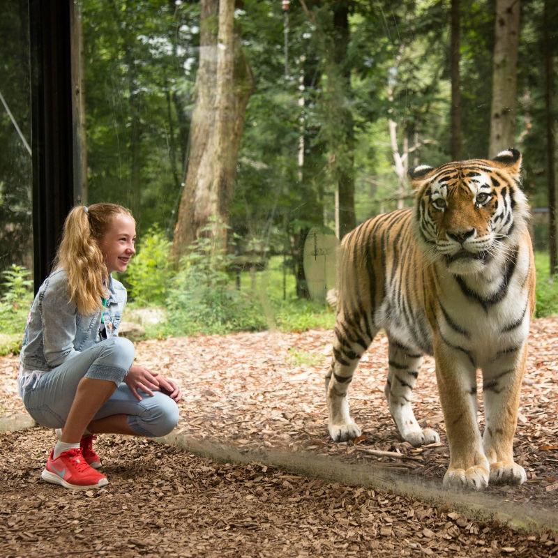 Tigrova ograda